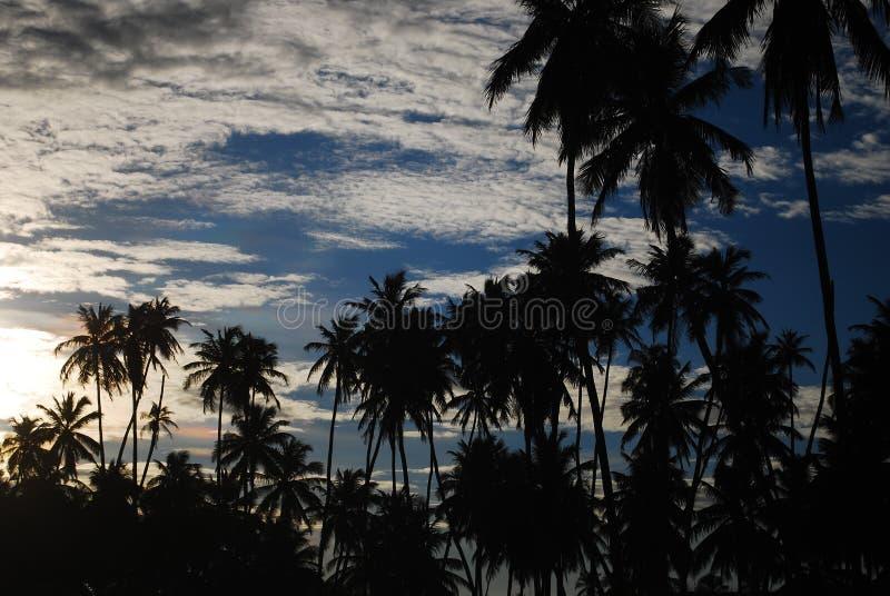 弗朗西丝海滩, Alagoas,巴西 图库摄影