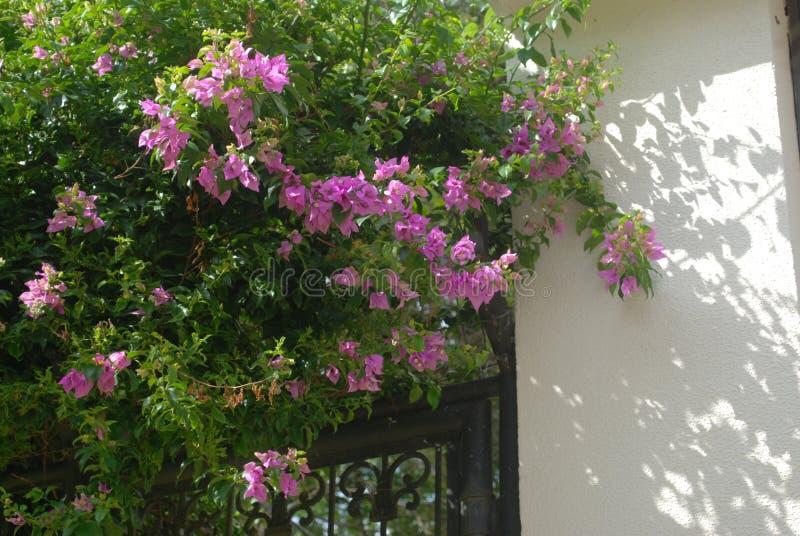 弗洛勒斯rosas, jardÃn额骨 免版税库存照片