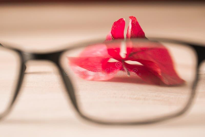 弗洛尔的红色和织地不很细瓣 免版税库存图片