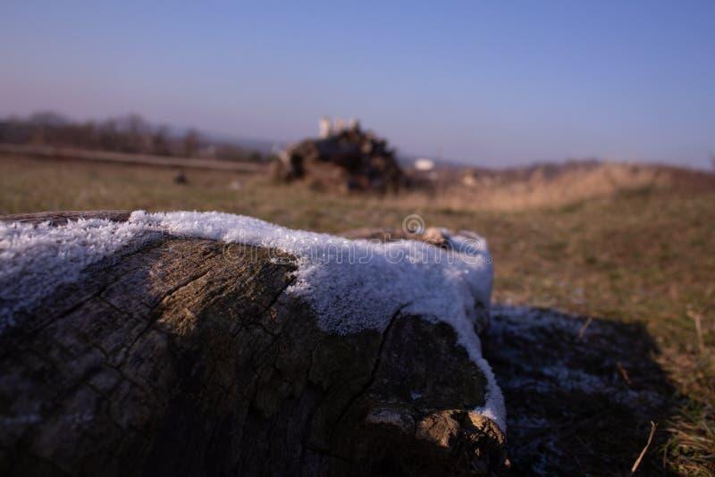 弗罗斯特木头在冬天 免版税库存图片