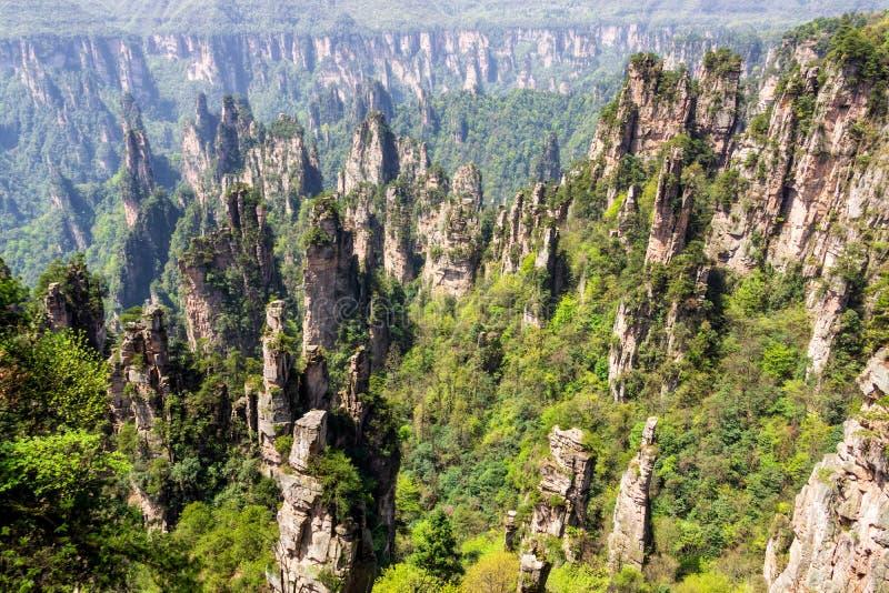 张家界森林公园 上升从峡谷的柱子山 武陵源,中国 图库摄影