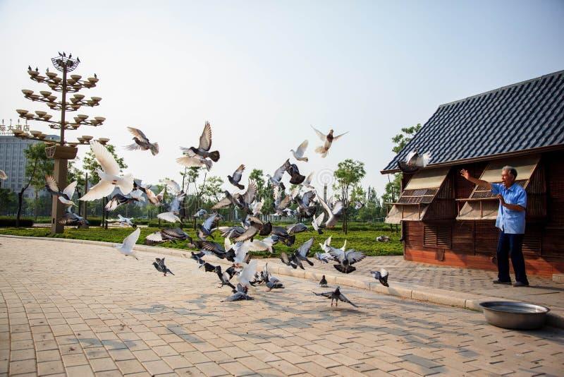 张掖丹霞地质公园 免版税库存图片