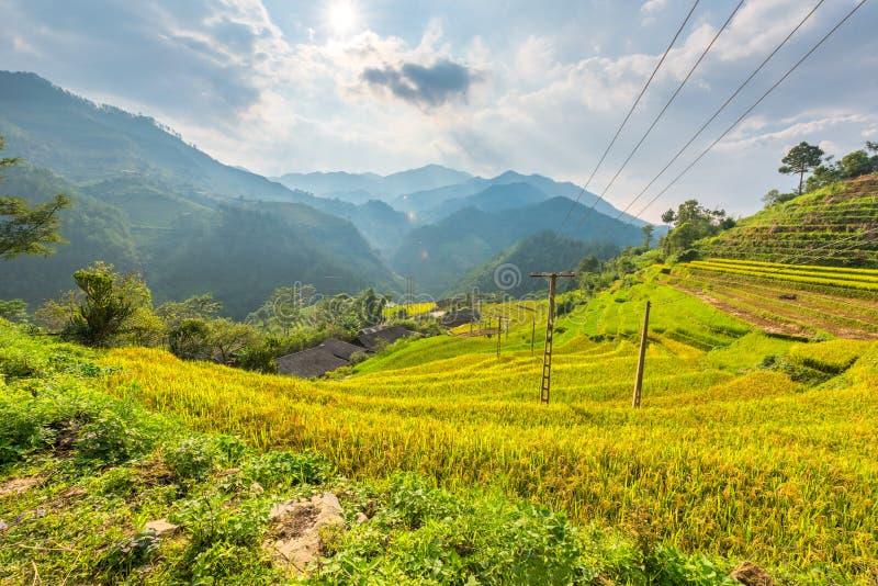 弯曲在大阳台的米领域在越南 免版税库存图片