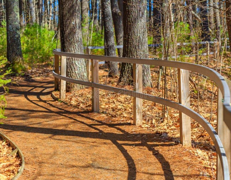 弯曲在绕森林道路的篱芭 库存照片