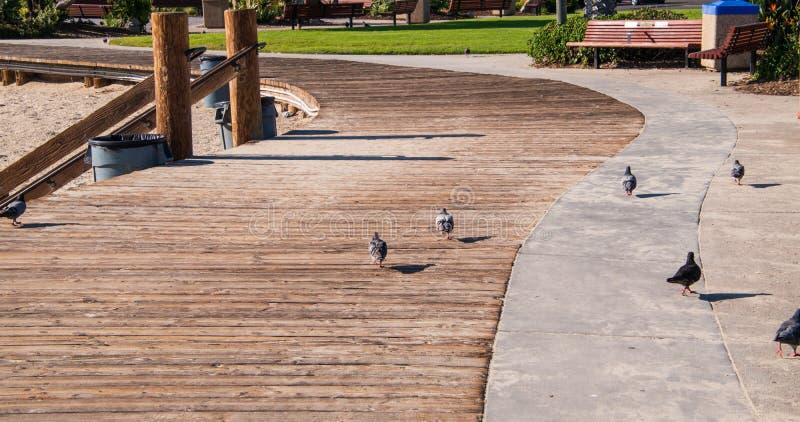 弯曲有鸽子的木木板走道 图库摄影