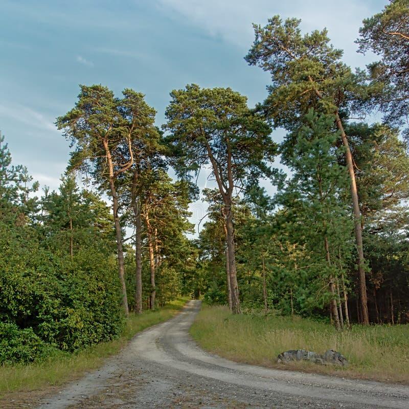 弯曲的土路thorugh一个绿色夏天森林在埃尔芒翁维尔,法国 免版税库存照片