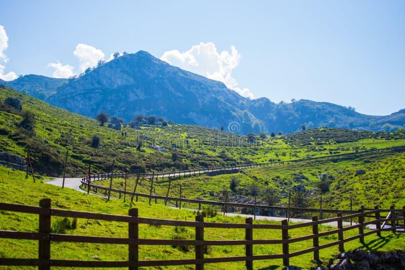 弯曲的柏油路在一个绿草领域的中部与山的在背景和篱芭在双方 呈S形的方式 免版税图库摄影
