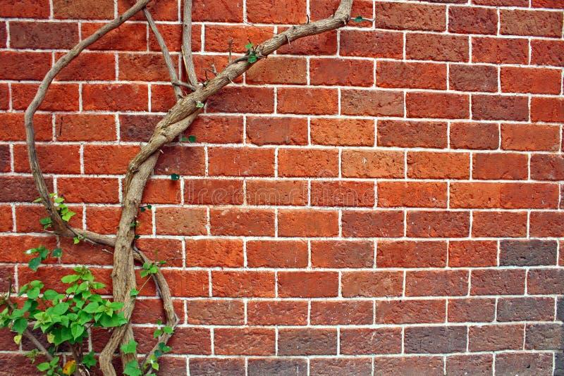 弯曲的树红色褐红的砖墙木刻背景 库存照片