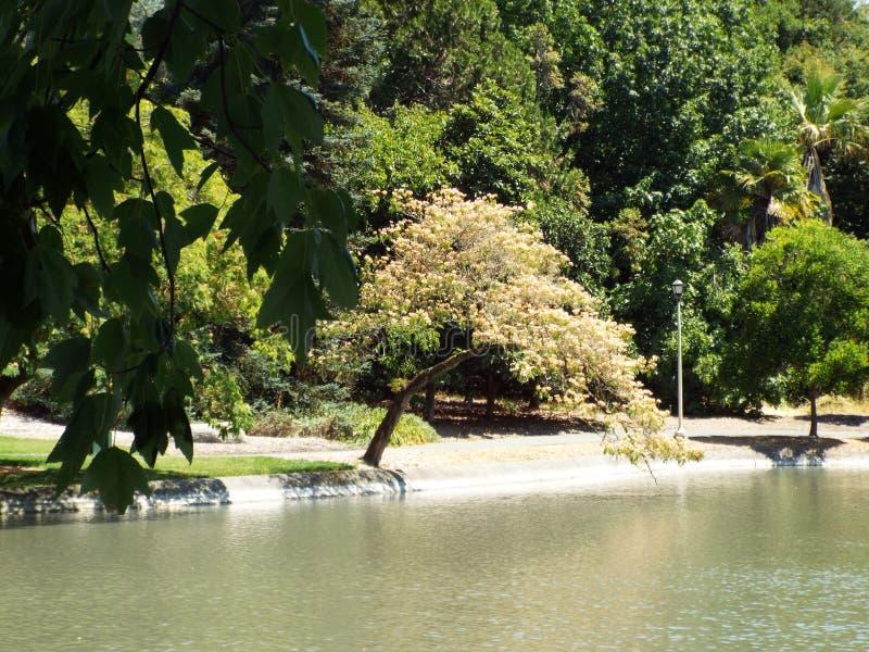 弯曲的树 库存图片