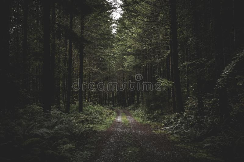 弯曲的狭窄的泥泞的路在绿叶包围的一个黑暗的森林里和从上面来一点的光 免版税库存图片