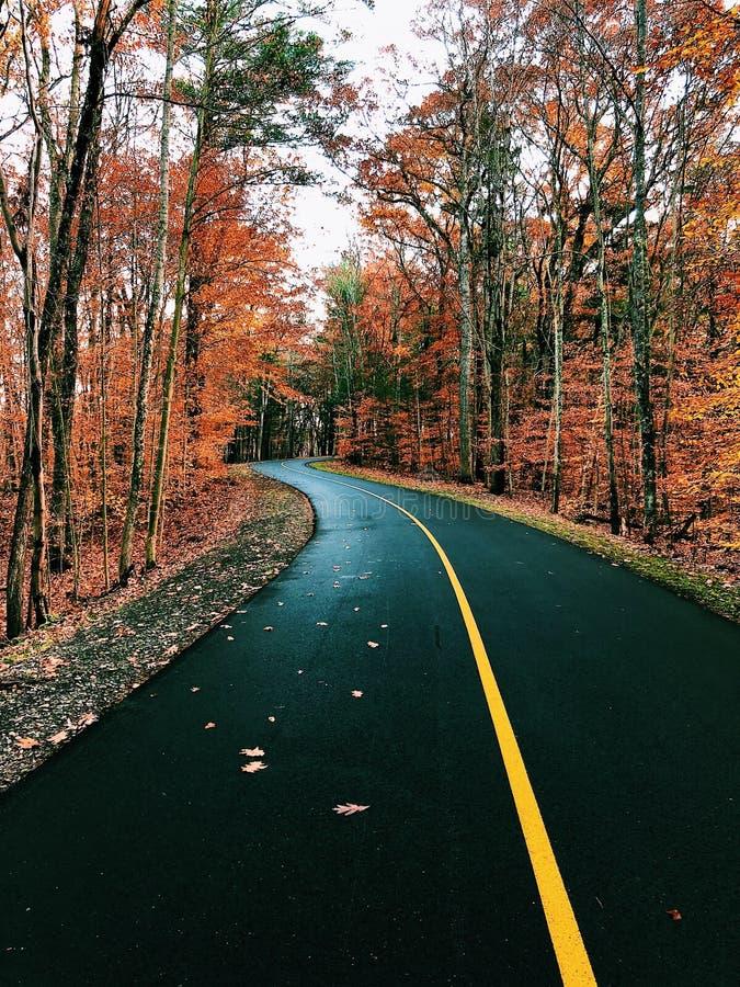 弯曲的秋天路通过森林 库存照片