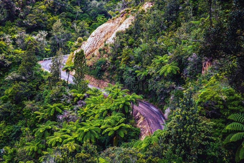 弯曲的路通过密林, Coromandel半岛,新西兰 免版税库存图片
