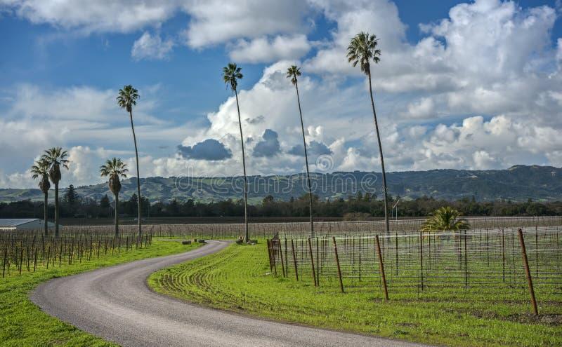 弯曲的路通过棕榈树和加利福尼亚葡萄园 图库摄影