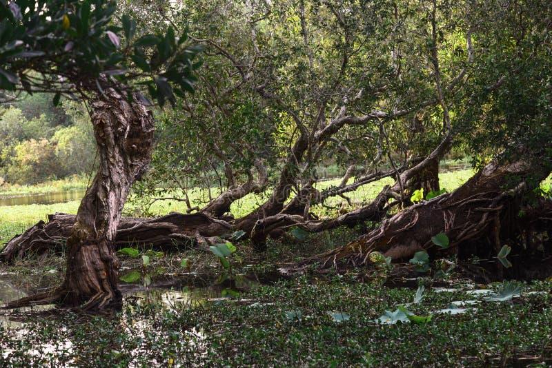 弯的树在水中 库存图片