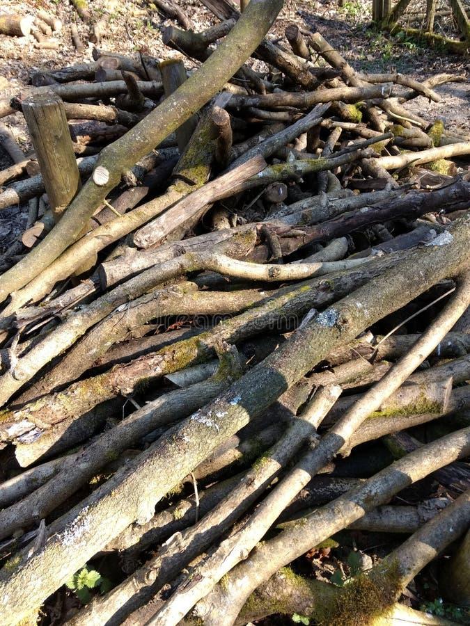 弱春阳光下的小原木堆 库存照片