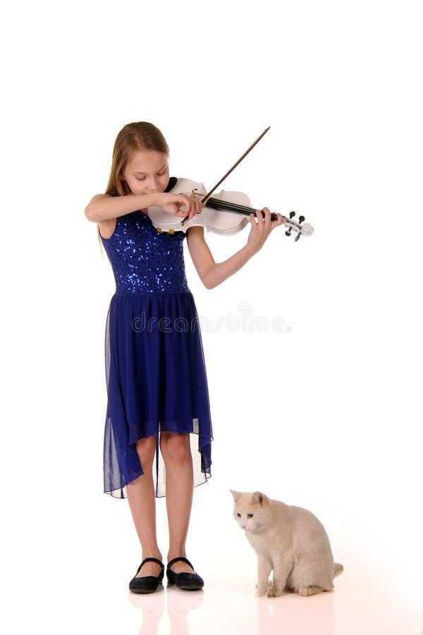 弹家庭白色猫的女孩小提琴 免版税库存照片