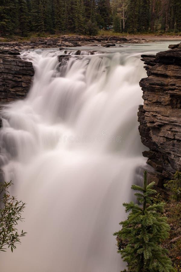 强大阿萨巴斯卡瀑布的画象视图在班夫国家公园,加拿大,紧压通过空白的水洪流  免版税库存照片