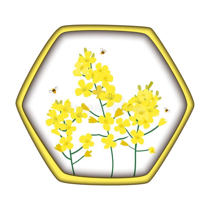 强奸蜂蜜概念 芸苔napus、油菜籽、菜子、含油种子、油菜和蜂 在六角形蜂蜜的传染媒介例证 库存例证