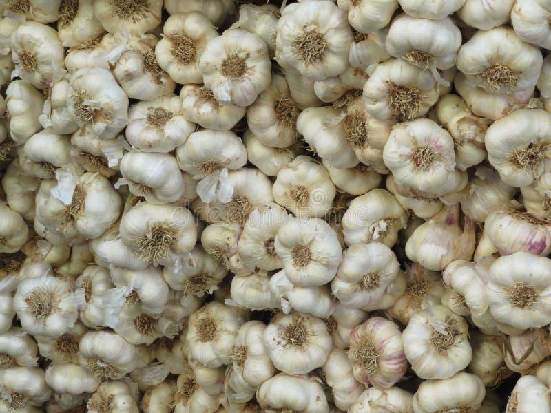 强烈的颜色和宜人的味道美丽的大大蒜  库存照片