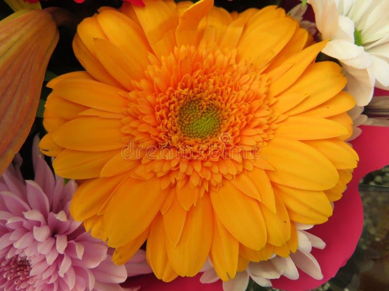 强烈的颜色美丽的花和巨大秀丽 库存图片