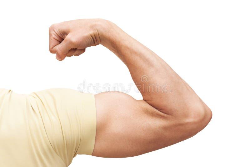 强的男性胳膊显示二头肌 在白色查出的照片 图库摄影