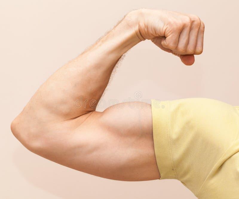 强的男性胳膊显示二头肌 库存图片