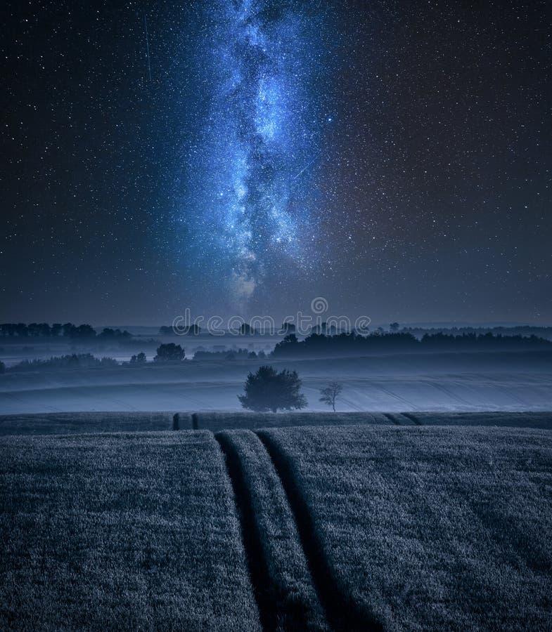 归档与一棵树在夏天和银河 免版税图库摄影