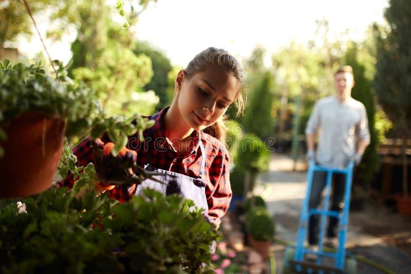 当人在庭院道路滚动推车在一好日子时,女孩花匠照料植物 工作在 免版税图库摄影