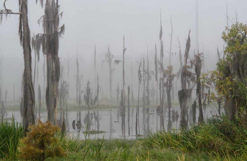 当从庞恰特雷恩湖的盐水进入淡水沼泽时,柏树灭绝 免版税库存照片