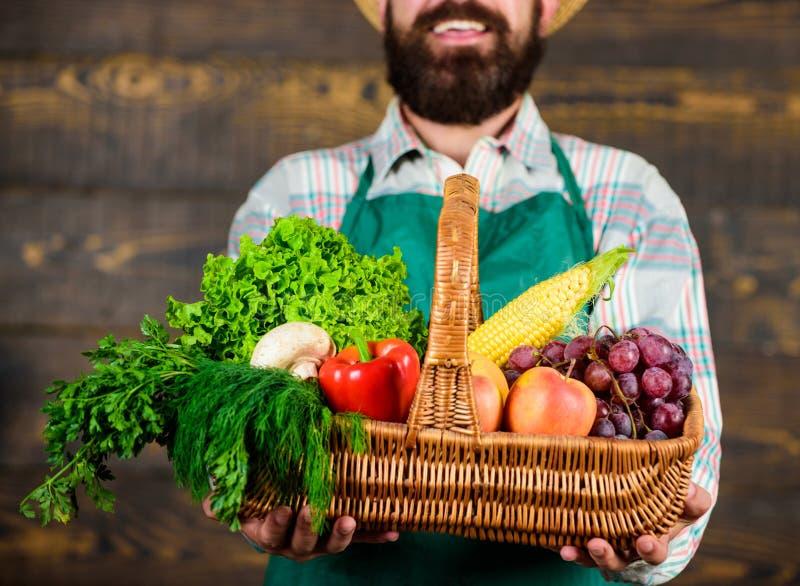 当前eco菜木背景的人有胡子的花匠 在柳条筐的新鲜的有机菜 农夫 免版税库存照片