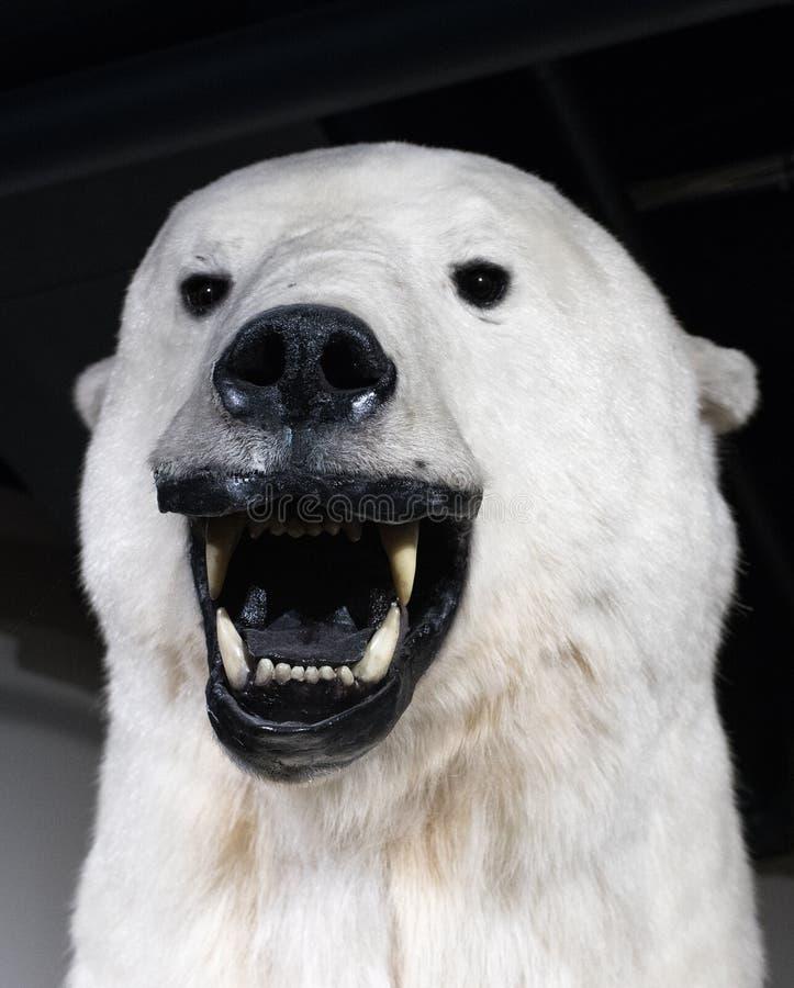 当北极熊时 库存图片