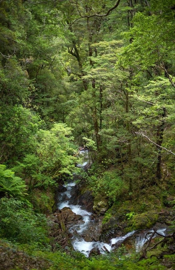 当地灌木,新西兰 库存照片
