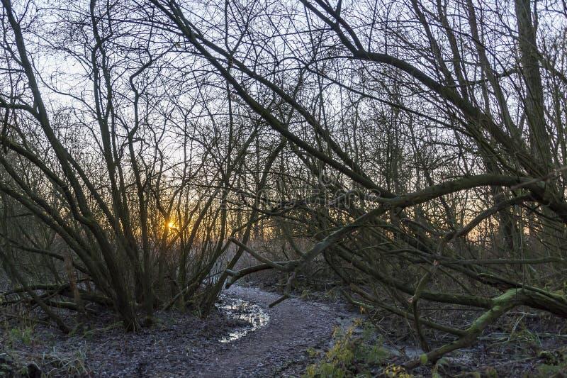 当太阳升起在湖Zoetermeerse plas时,forrest Prielenbos的底部结冰 免版税图库摄影