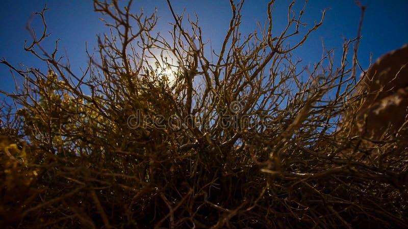 当它在山上,上升太阳打破在沙漠 图库摄影