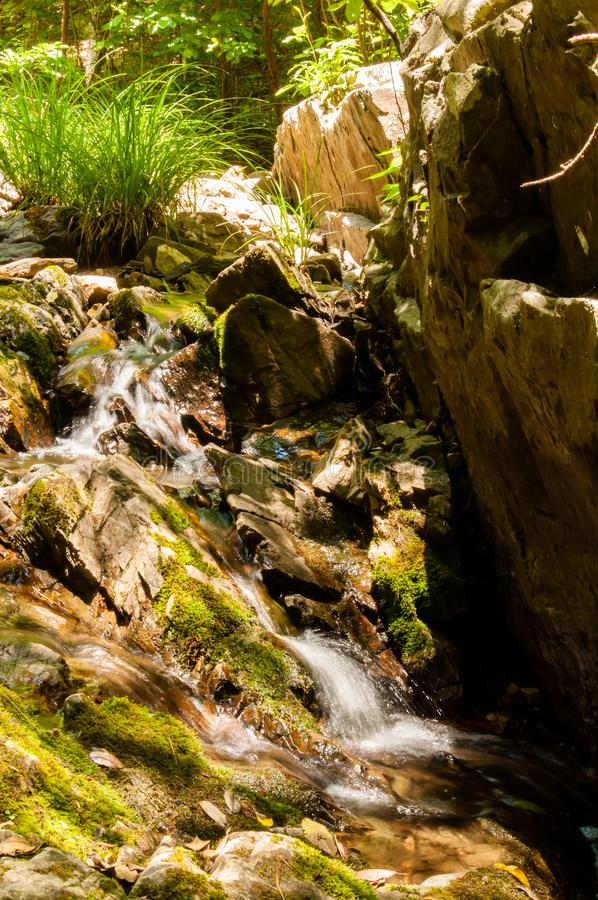 当它流动通过丛草,小河落下在岩石 免版税库存照片