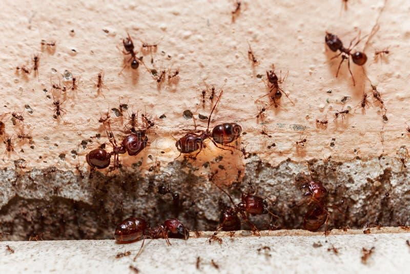 当心人群大蚂蚁,他们在家居住 免版税图库摄影