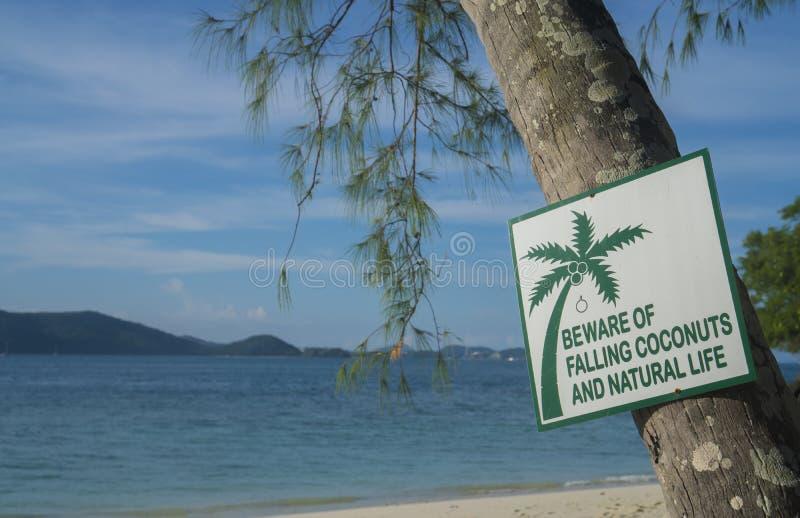 当心落的椰子和自然生命标志 免版税图库摄影