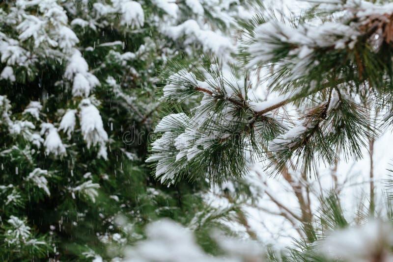 当温度下跌时,冬天霜冬天,冬天小白色冰晶在地面或其他表面形成了 免版税库存图片