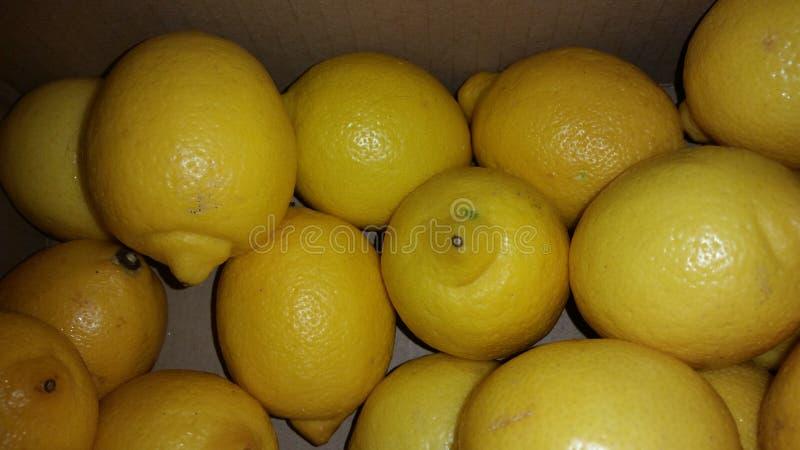 当生活给您柠檬 免版税库存照片