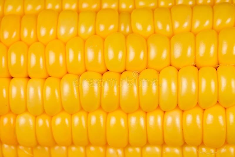 当纹理分类被隔绝的新鲜的甜玉米 库存照片