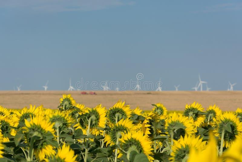 当这个向日葵领域在南罗马尼亚,俯视一个风力场传统农业面对新技术 免版税库存照片