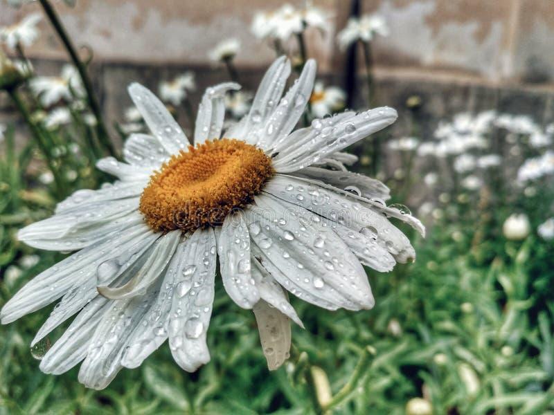 当雨做一张美丽的照片 库存图片