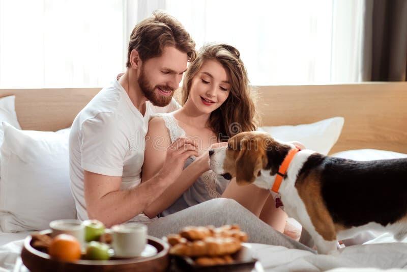 当食用早餐在卧室时,快乐的家庭夫妇在床与他们喜爱的宠物,饲料狗上度过周末早晨 库存图片