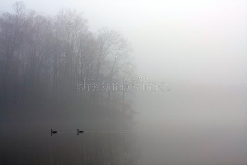 当鸭子游泳,雾厚实的毯子盖湖 免版税库存照片