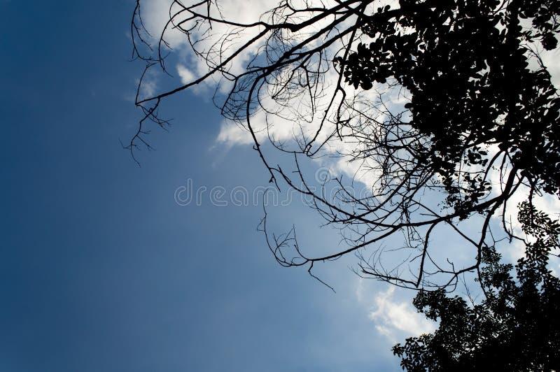 形成流明树被交织的分支反对bl 库存图片