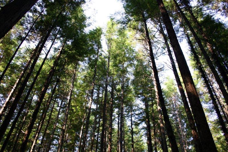 形成结构树 免版税图库摄影