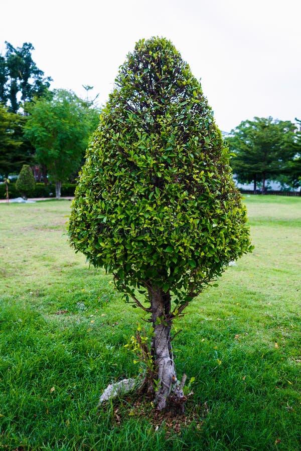 形状的结构树 免版税库存图片