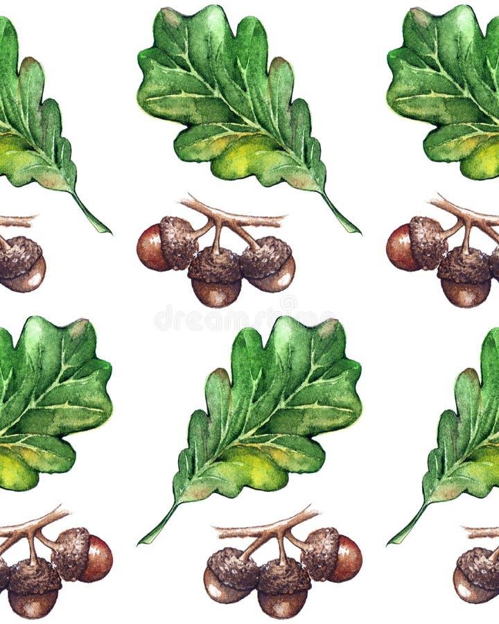 水彩三橡木绿色叶子橡子种子无缝的样式背景 皇族释放例证