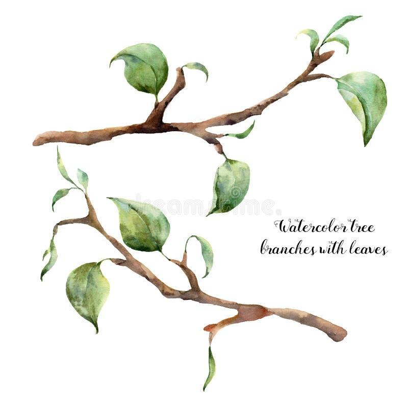 水彩与叶子的树枝 在白色背景隔绝的手画花卉例证 设计的春天元素图片