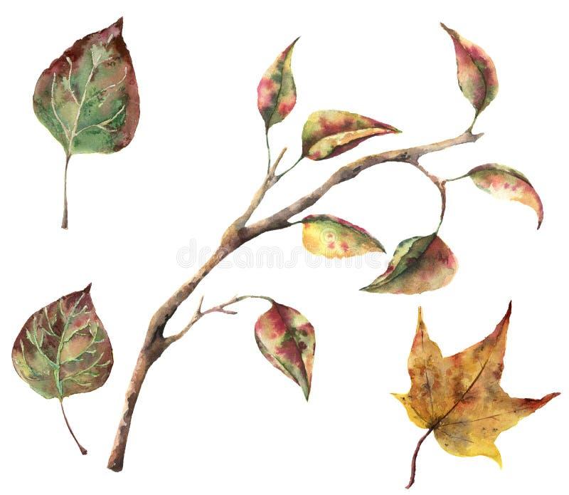 水彩与树枝和秋天叶子的秋天集合 在白色背景隔绝的手画秋天剪贴美术为 皇族释放例证